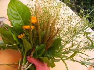 Травы для очищения лёгких после курения